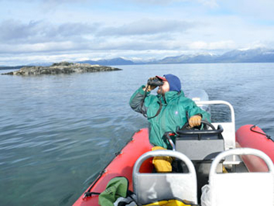 Wildlife Viewing on a Ketchikan Zodiac Tour